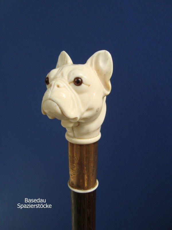 Franz. Bulldogge