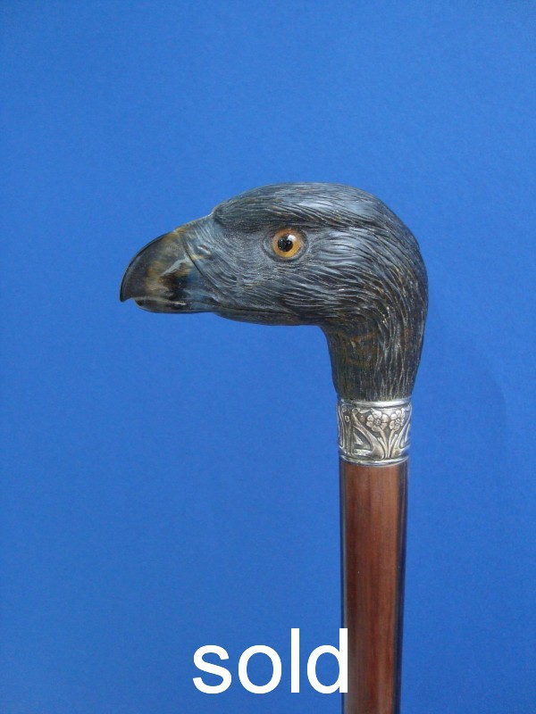 A tigereyes eagle`s head
